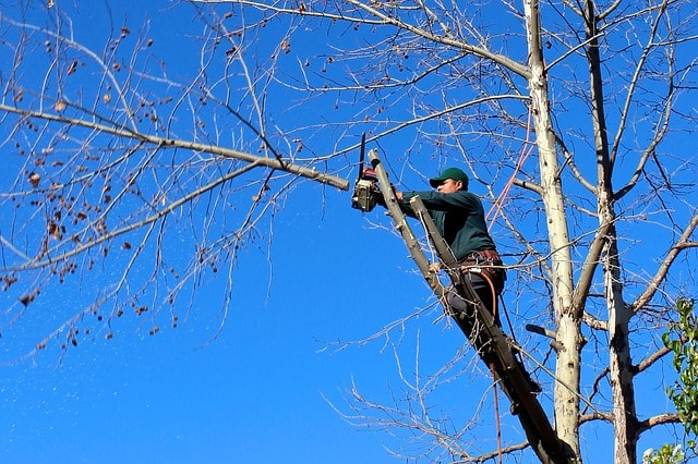 elagage arbre chatou