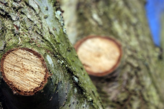 elagage arbre montesson