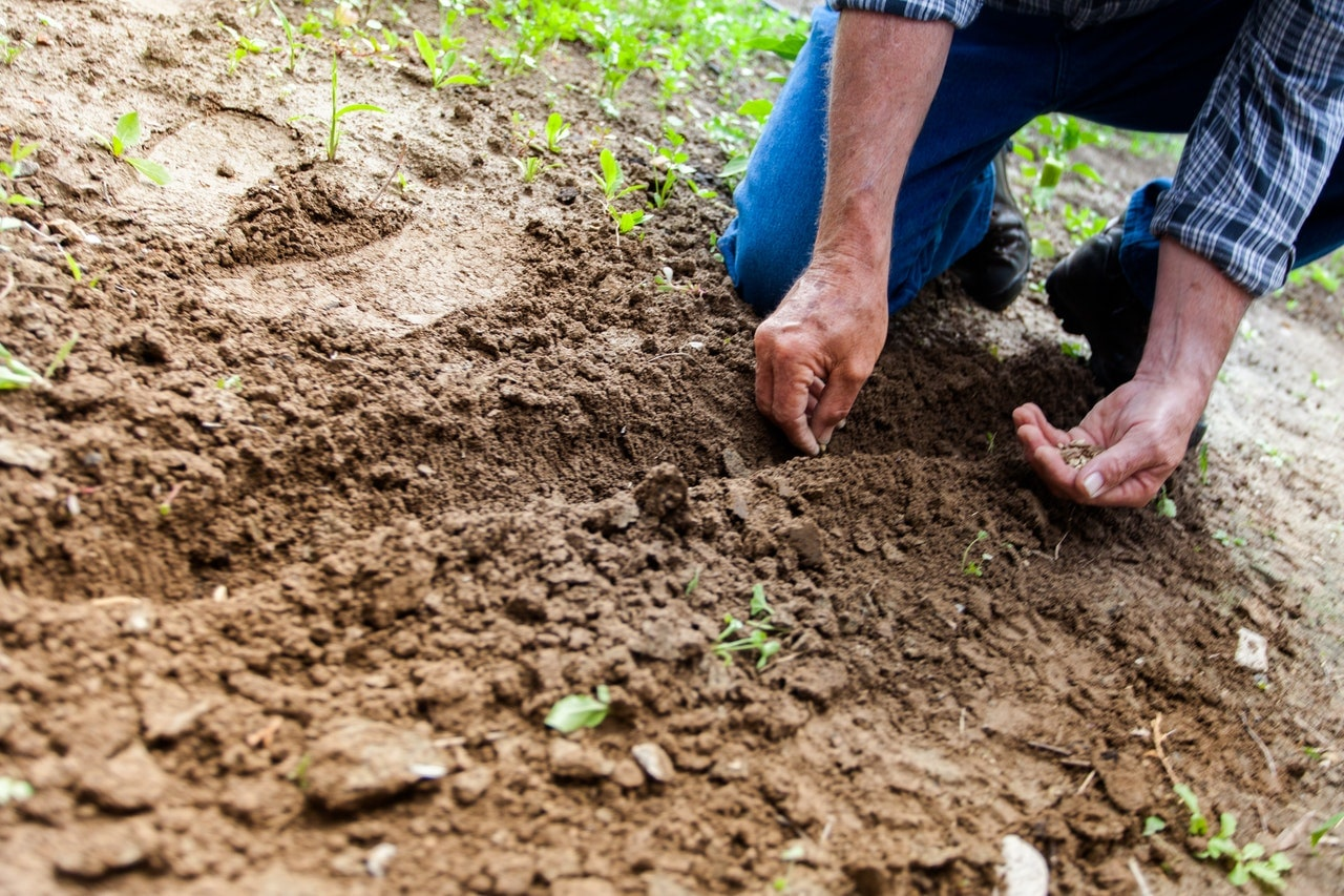 entretenir son jardin en avril