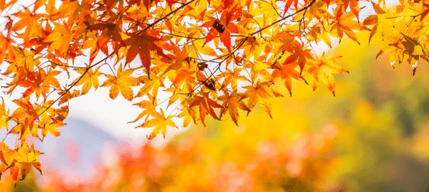 Conseils pour préparer son jardin pour l'automne